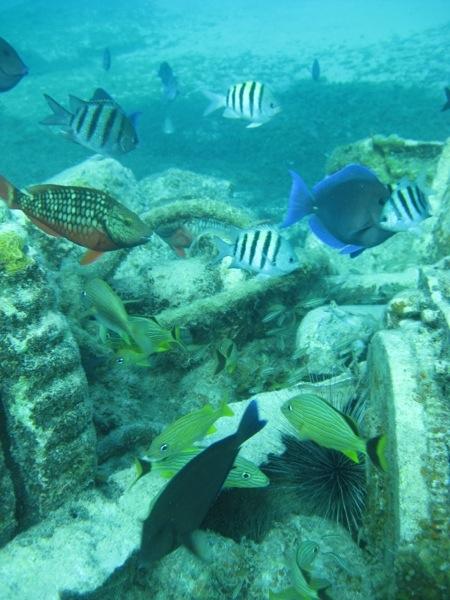 Rode Trip - snorkeling - fish