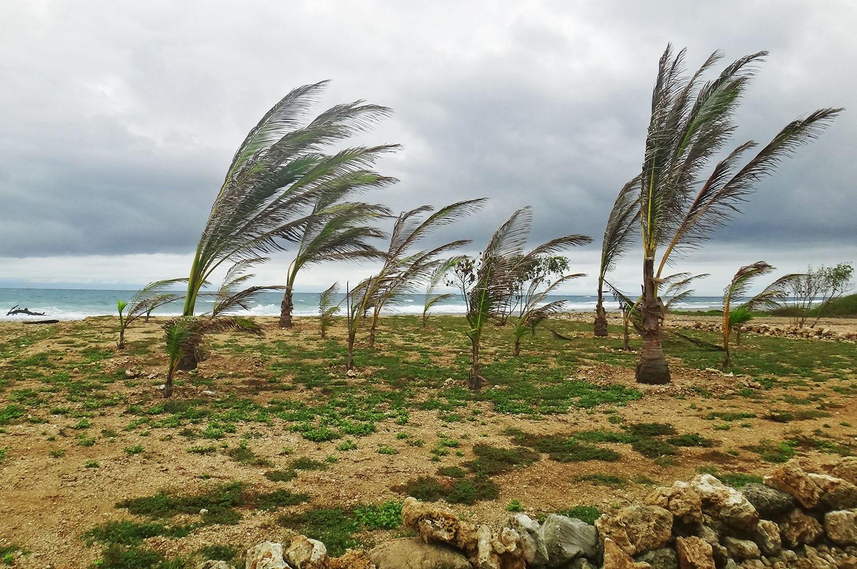 Palm trees on Utila