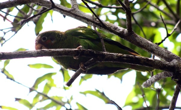 mastic trail - parrot 2