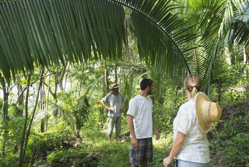 hiking through jungle
