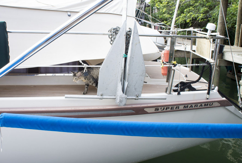 Georgie on neighbor's boat