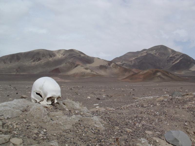 PE Nazca Bones