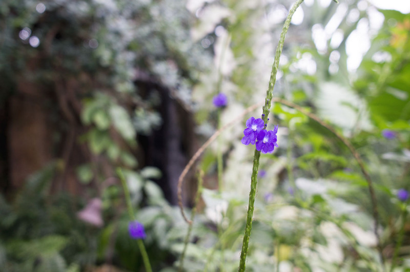 FMG Tropical Conservatory 1
