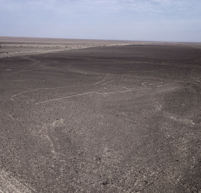 Nazca Lines - frog