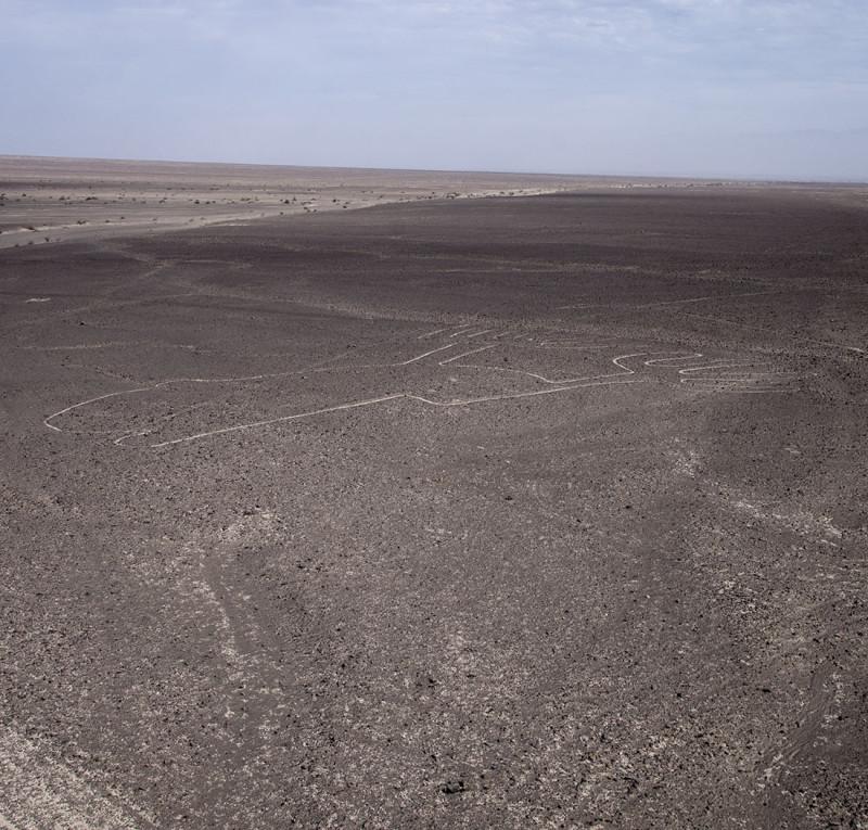 Nazca Lines - frog