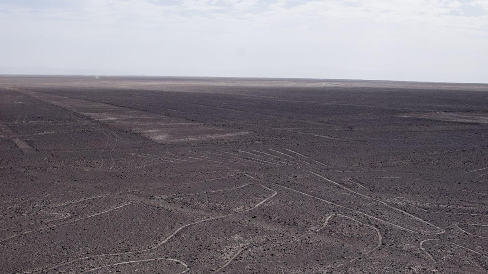 Nazca Lines - tree & lizard