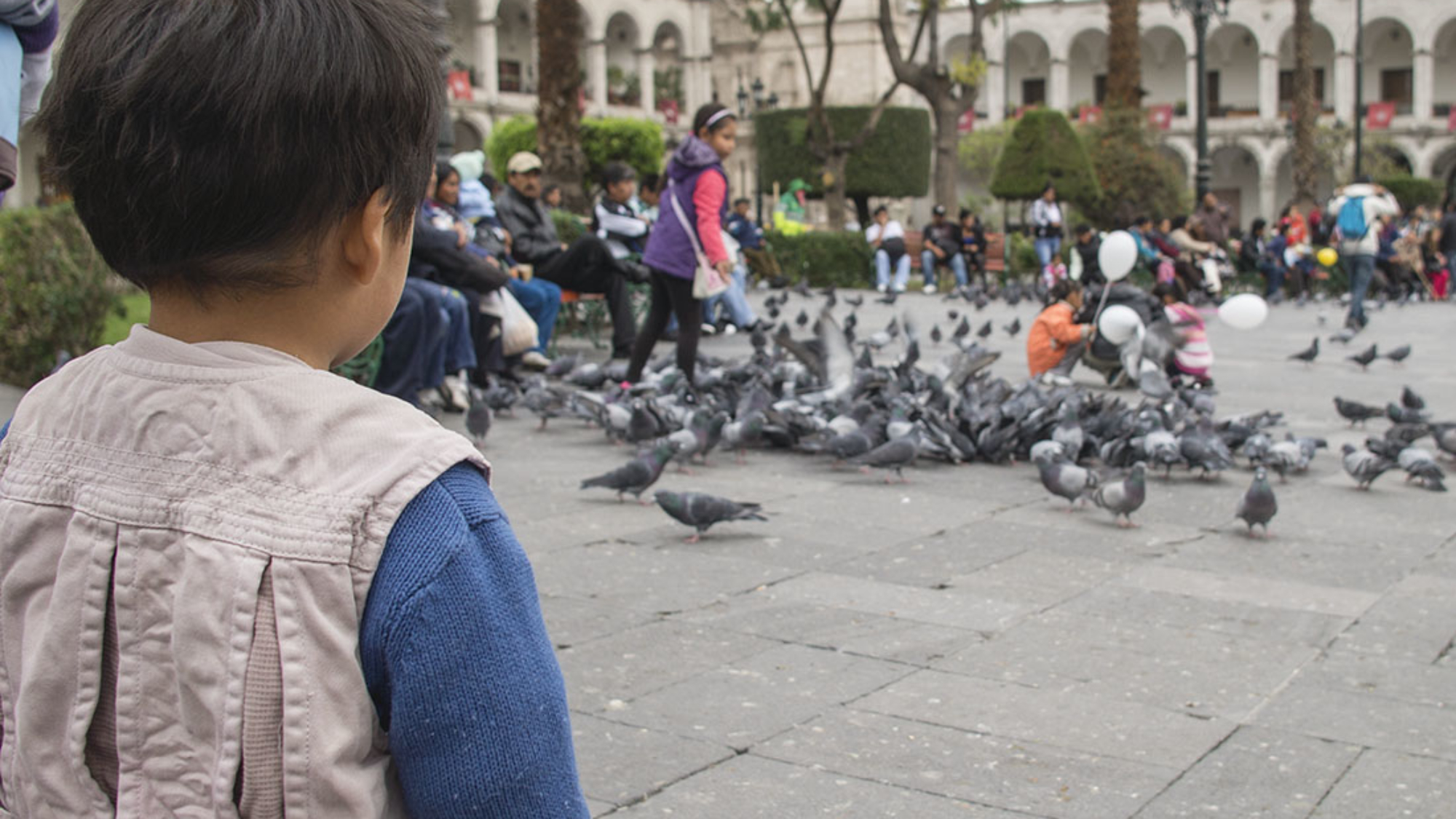 watching pigeons Plaza de Armas Arequipa