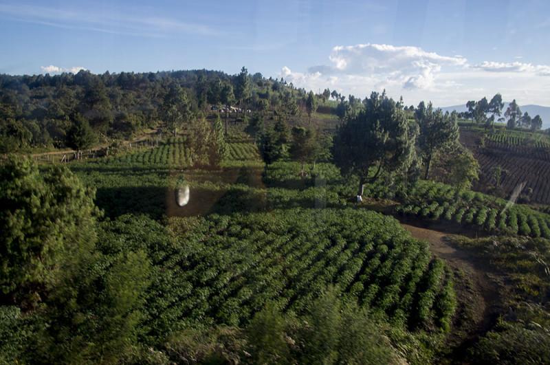 crops growing over Medellin