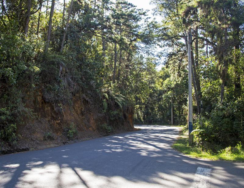 road through Arvi Park