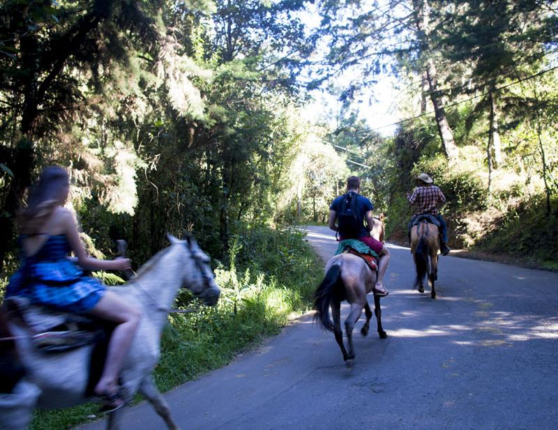 horses through Arvi Park Medellin
