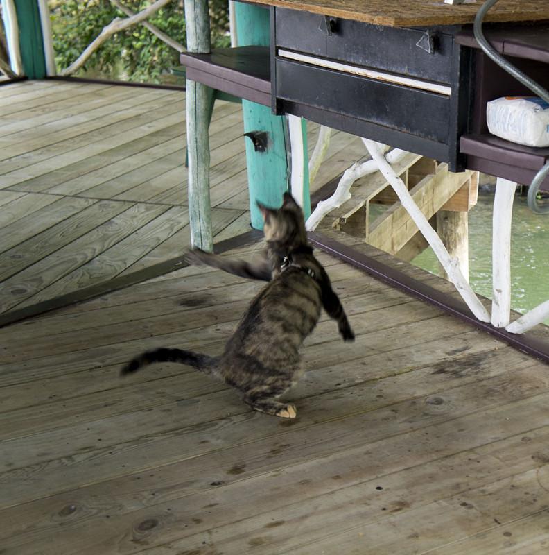 Georgie batting bugs at the ranchito.