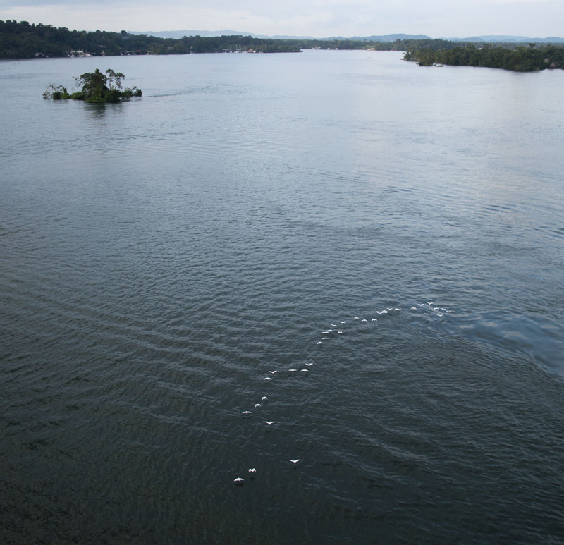 birds flying under bridge, Rio Dulce, Guatemala