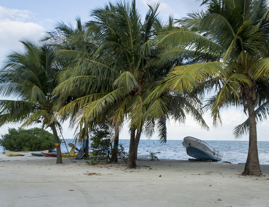 lancha in palm trees, Cay Caulker, Belize