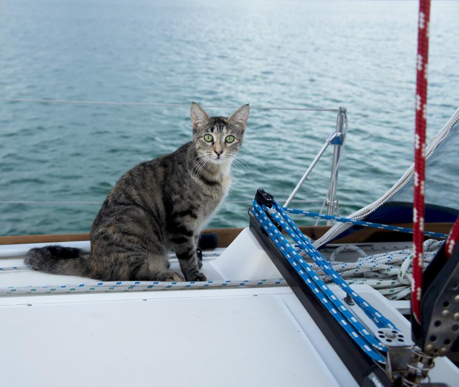 Georgie on deck