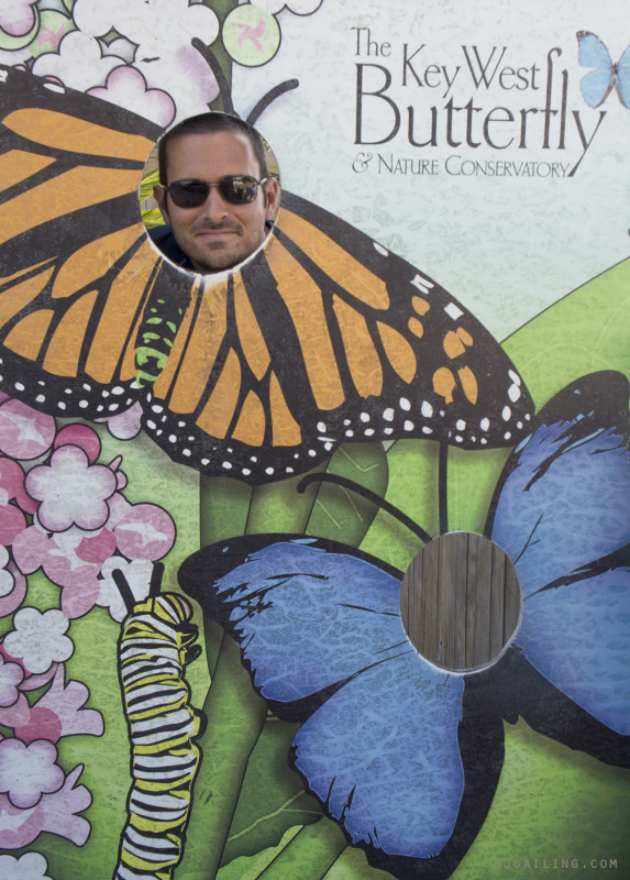 Matt in butterfly cut out