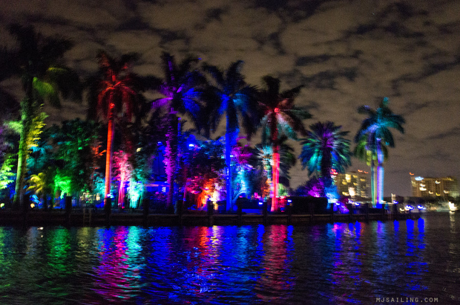 palm trees lit up at night