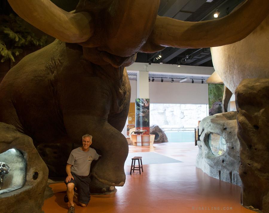 Jack & elephant
