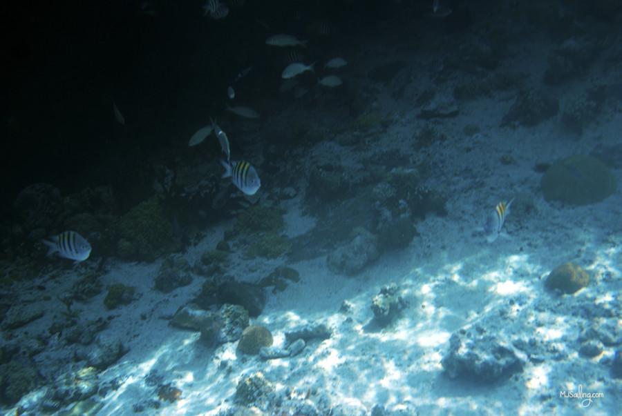 fish at Thunderball Grotto