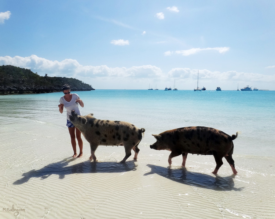 Jessica with pigs at Big Majors