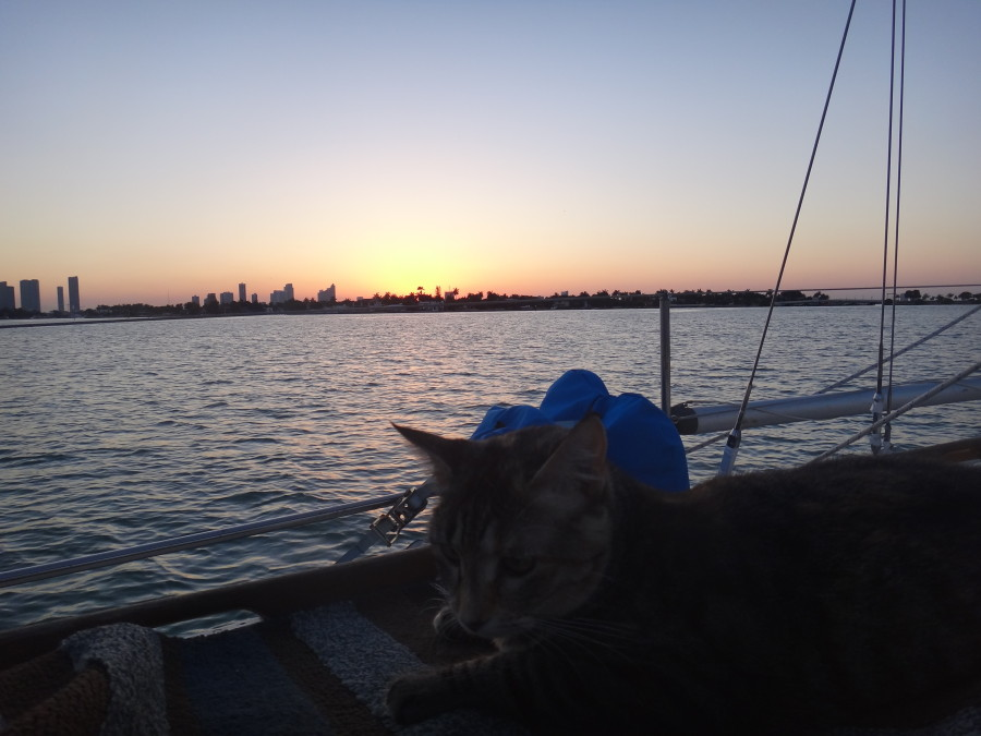 Georgie at sunset