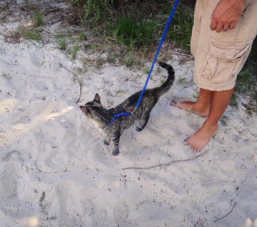 Georgie on Beach