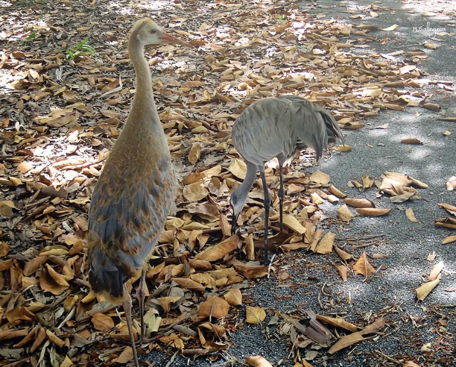 birds at Crandon Park