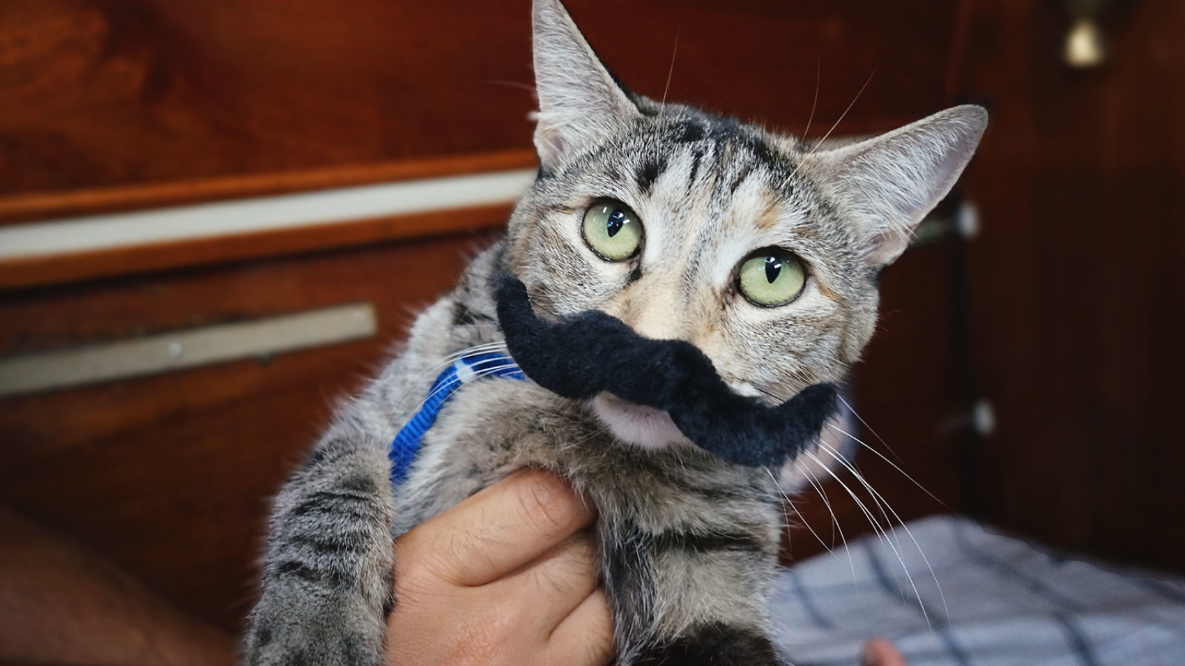 cat with fake mustache