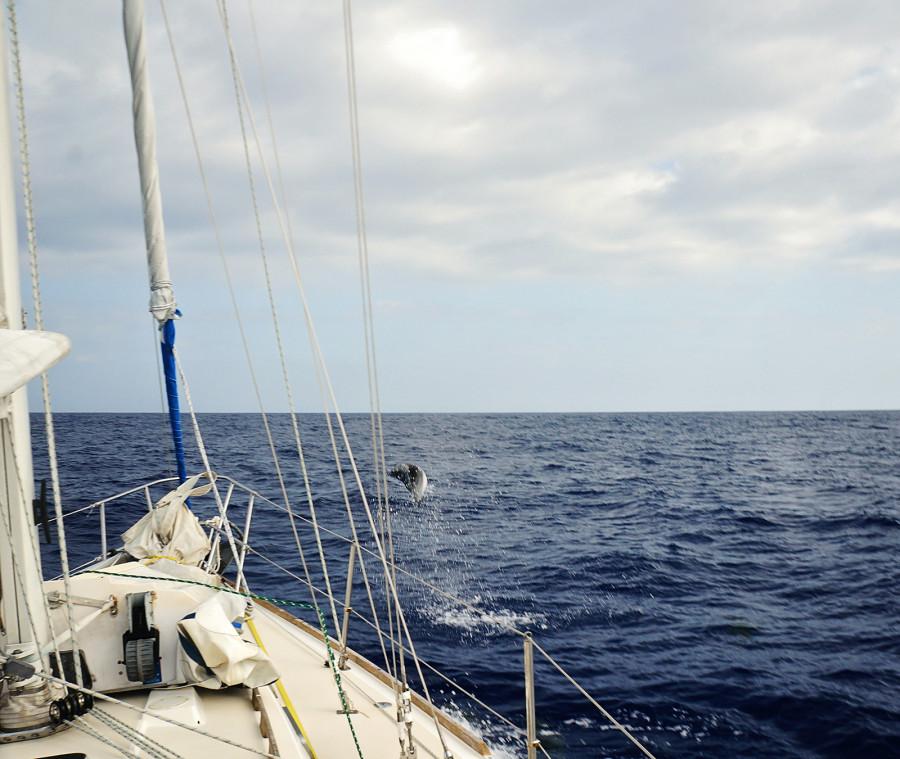 dolphin jumping at bow