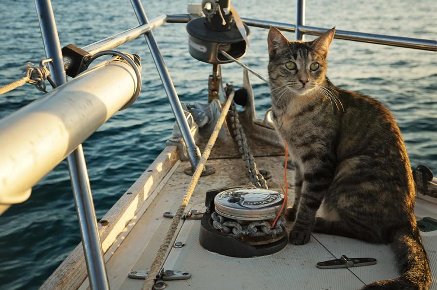 gatos del mar