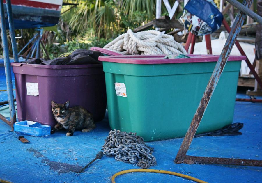 stray cat, Bandit