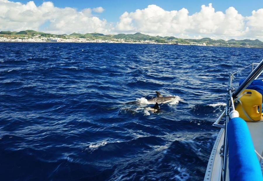 saddleback dolphins
