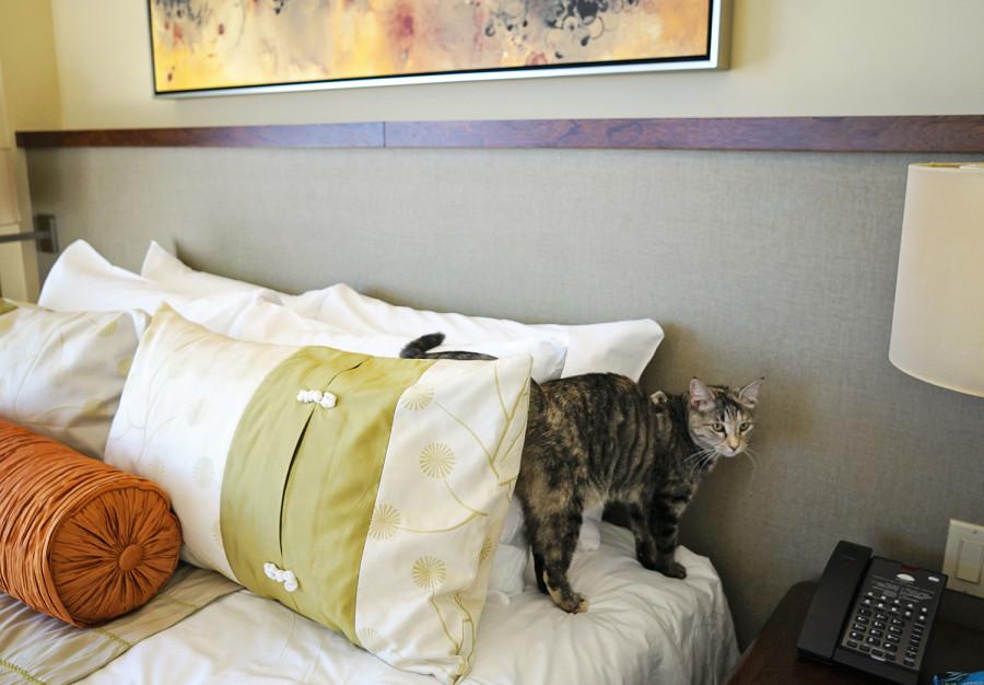 Georgie at hotel
