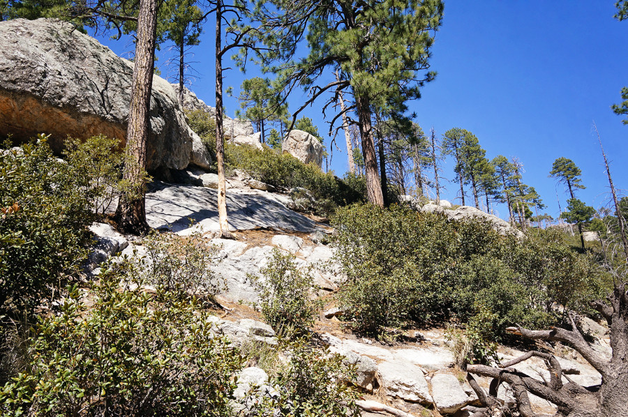 Summerhaven, Mt. Lemmon AZ