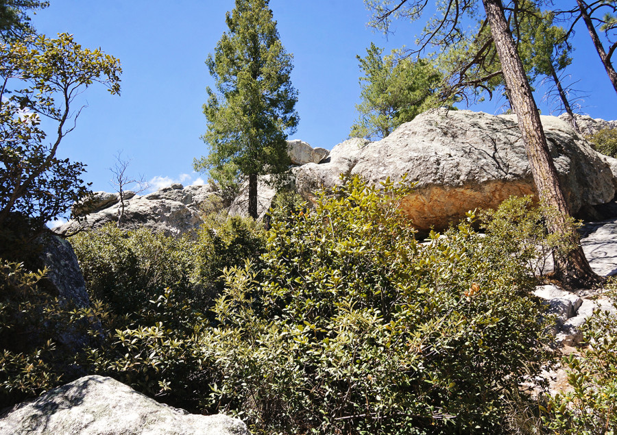 hiking in Summerhaven, Mt. Lemmon