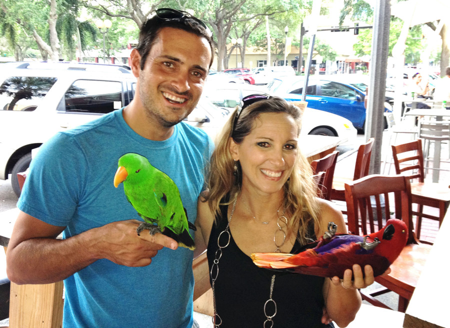 Matt& Melody parrots 2